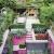 Grüne Inseln - Kleine Gärten in der City (Garten- und Ideenbücher BJVV) -