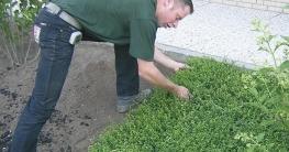 kultivierten Vegetationsmatten