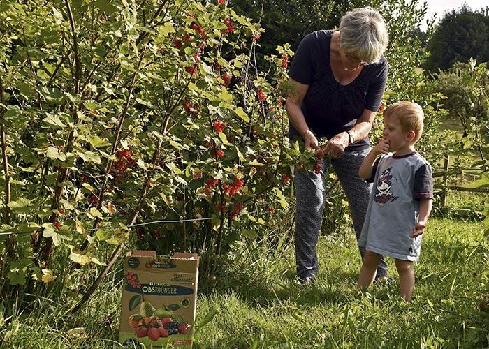 Naschgarten Leckere und vitaminreiche Früchte