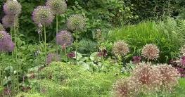 Staudengärten Gartentipps