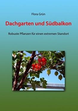 Dachgarten und Südbalkon: Robuste Pflanzen für einen extremen Standort - 1