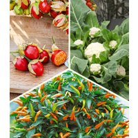Topf-Gemüse-Kollektion