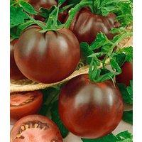 Veredelte Stab-Tomate 'Kakao' F1