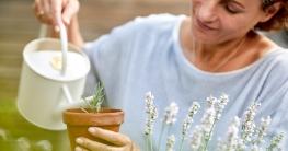 Dufte Gartenarbeit: Lavendel gießen