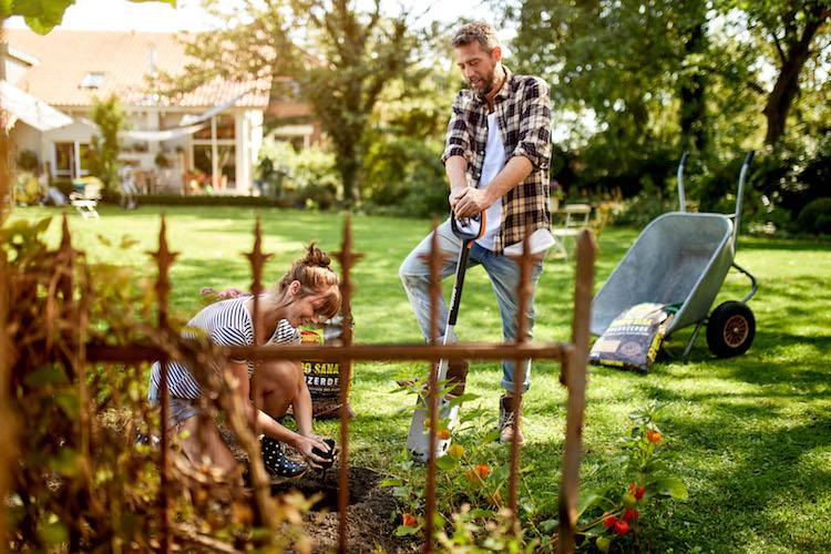 Vor dem Einpflanzen unbedingt die Beschaffenheit vom Boden prüfen