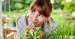 Riechen gut uns sind gesund: Frische Kräuter lassen sich das ganze Jahr auf der Fensterbank züchten