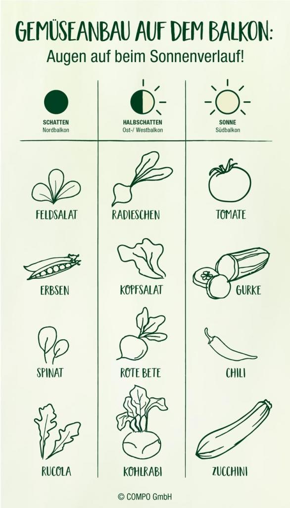 llustration Gemüseanbau Balkon Lichtbedarf Pflanzen
