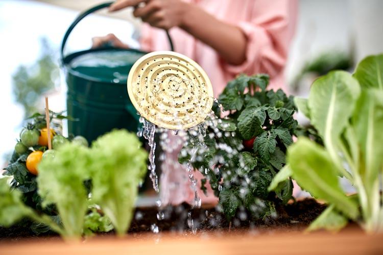 Hochbeet Gemüsepflanzen gießen