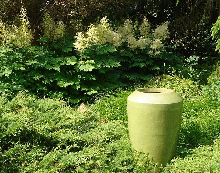 Unter den Stauden gibt es viele Sorten, die ihre Blüten in beachtlicher Höhe öffnen. Hier empfehlen sich vor allem solche, die kompakt wachsen und sich nicht ausbreiten. In schattigen Gartenbereichen können beispielsweise Prachtspieren (Astilbe) für Farbe sorgen.