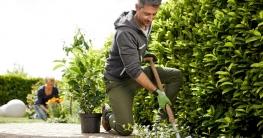 Neupflanzung Hecke Schritt 1 : Pflanzloch ausheben