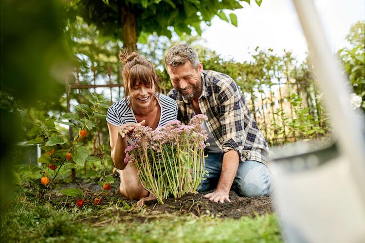 Die richtige Pflanzenauswahl ist entscheidend für einen schönen Garten