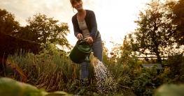 Im Sommer sollten Pflanzen sollten möglichst am frühen Morgen gegossen werden