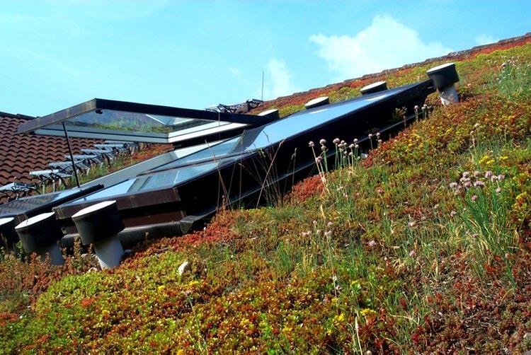 Selbst Steildächer bis zu einer Neigung von 45 Grad können extensiv begrünt und zu weithin sichtbaren Blickfängen werden.