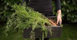 In den letzten Jahren entdecken immer mehr Menschen, welche Freude es macht, Gemüse und Salat anzubauen und zu ernten.